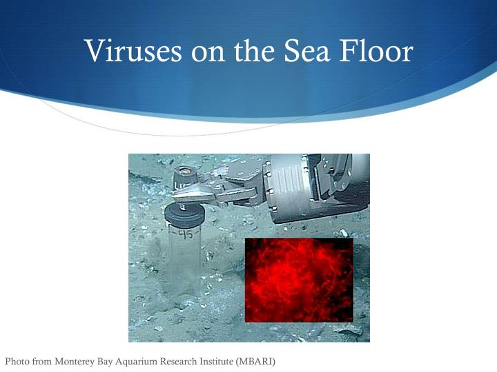 Viruses on the Sea Floor