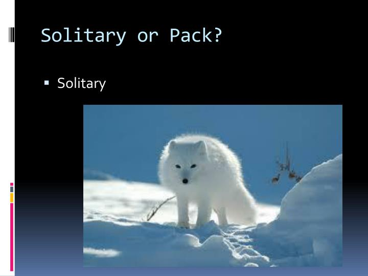 Solitary or Pack?