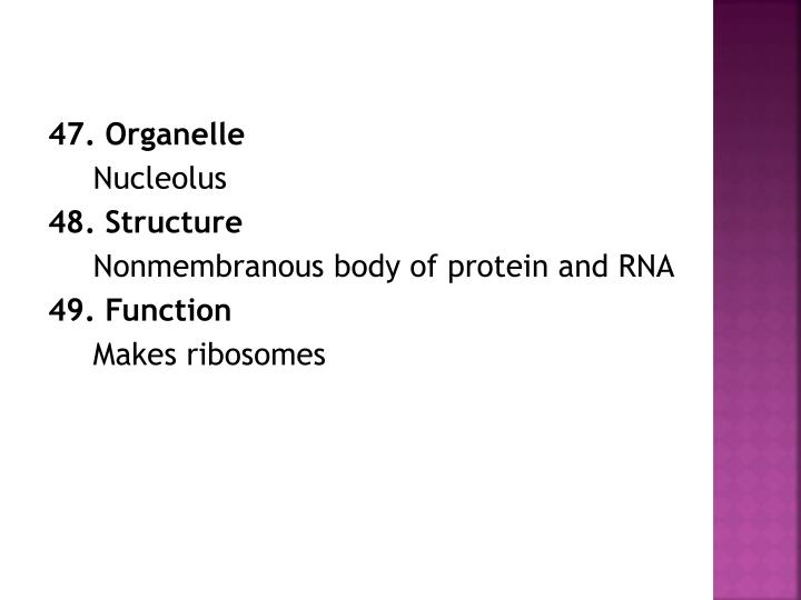 47. Organelle