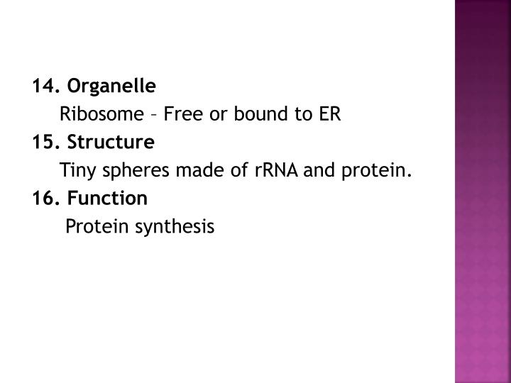 14. Organelle