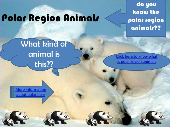 do you know the polar region animals??