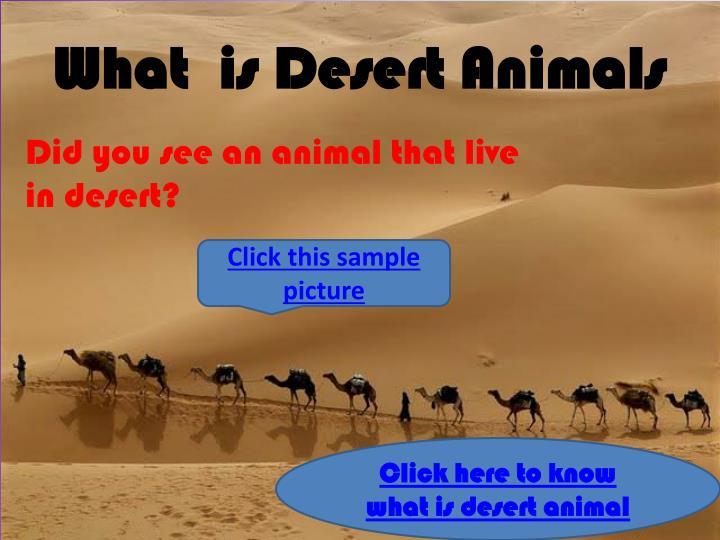 What  is Desert Animals