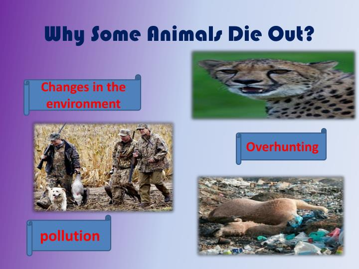 Why Some Animals Die Out?