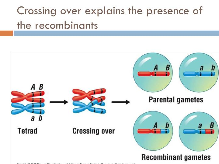 Crossing over explains the presence of the recombinants