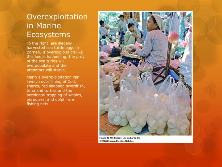 Overexploitation in Marine Ecosystems