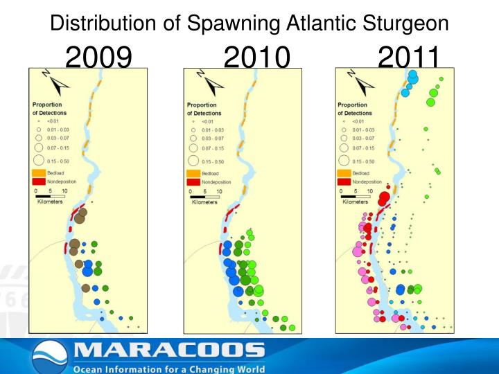 Distribution of Spawning Atlantic Sturgeon
