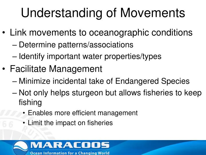 Understanding of Movements