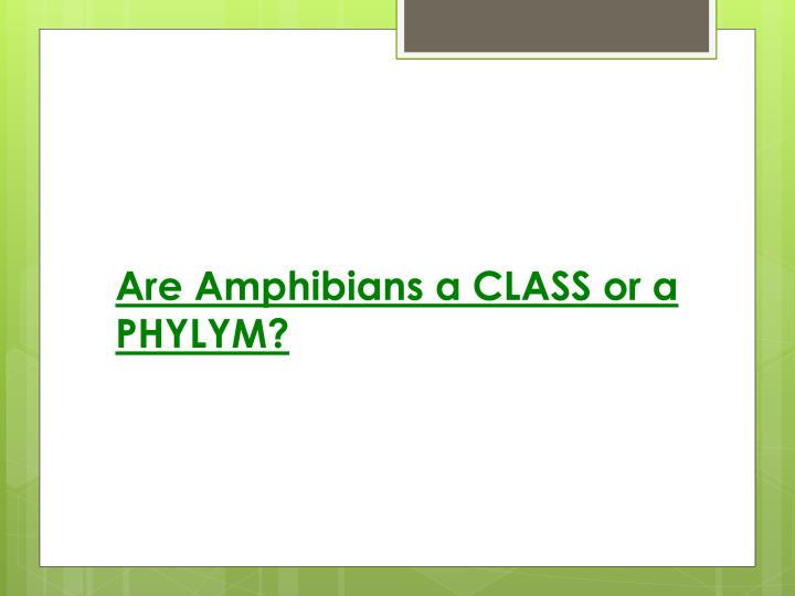 Are Amphibians a CLASS or a PHYLYM?