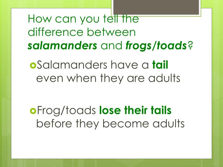a comparison of the similarities and differences among the salamanders 2018-8-15  the differences and similarities between reptiles and amphibians  differences between reptiles and amphibians  toads, frogs, caecilians, newts and salamanders.