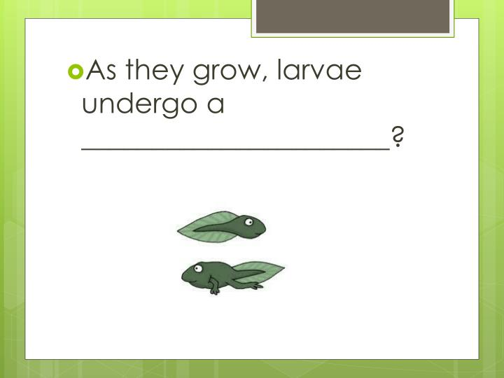 As they grow, larvae undergo a ______________________?