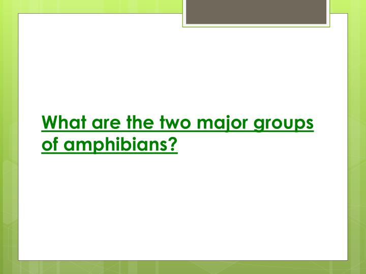 What are the two major groups of amphibians?