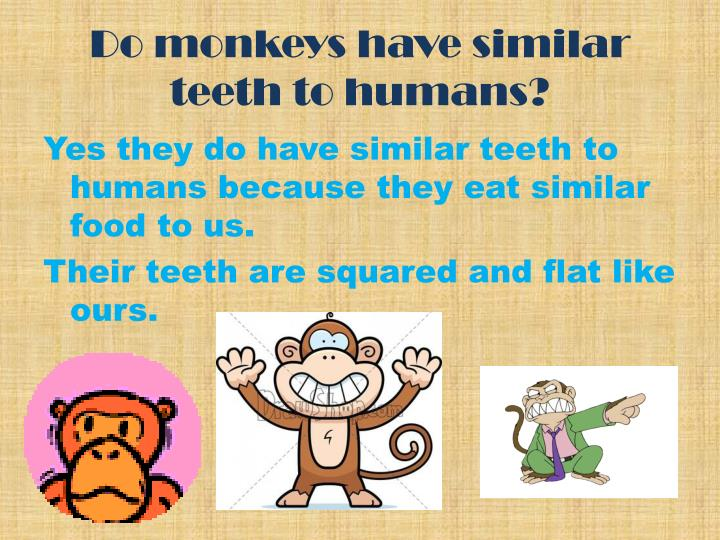 Do monkeys have similar teeth to humans?