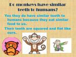 do monkeys have similar teeth to humans
