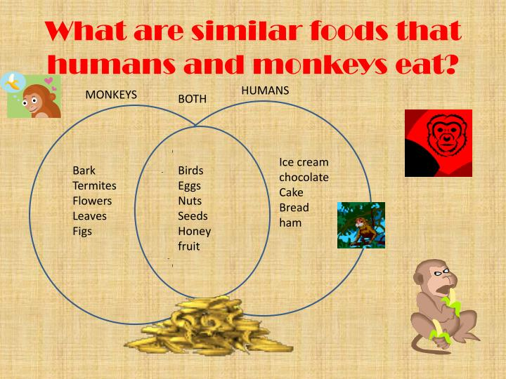 What are similar foods that humans and monkeys eat