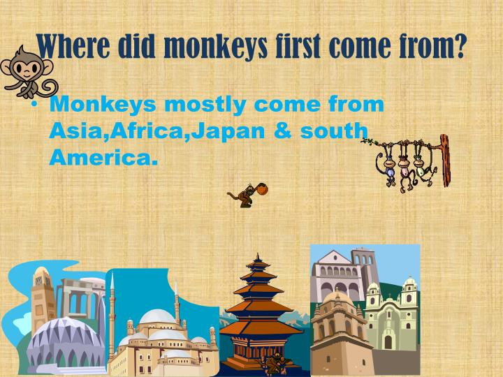 Where did monkeys first come from?
