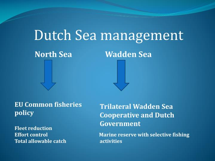 Dutch Sea management
