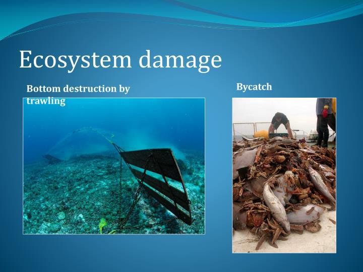 Ecosystem damage