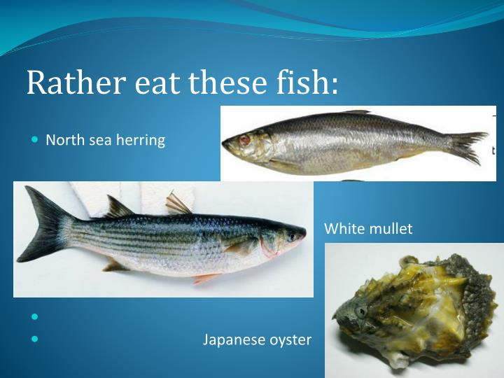 Rather eat these fish: