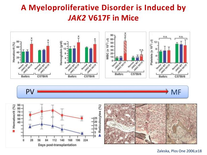 A myeloproliferative disorder is i nduced by jak2 v617f in mice