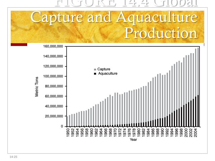 FIGURE 14.4 Global Capture and Aquaculture Production