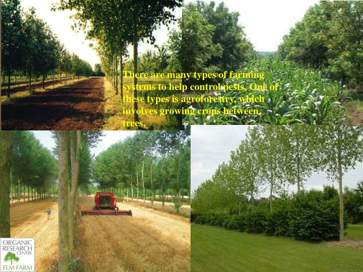There are many types of farming systems to help control pests. One of these types is agroforestry, which involves growing crops between trees.
