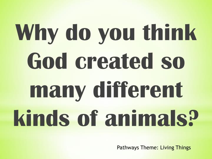 Why do you think God created so many different kinds of animals?