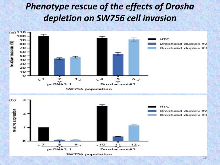 Phenotype rescue of the effects of Drosha depletion on SW756 cell invasion