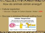how do animals obtain energy