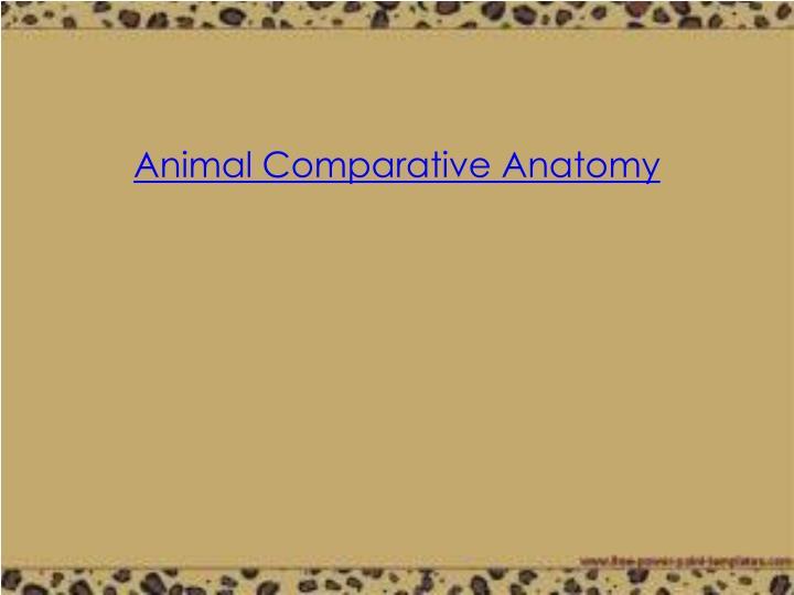 Animal Comparative Anatomy