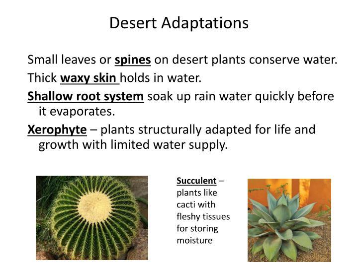 Desert Adaptations