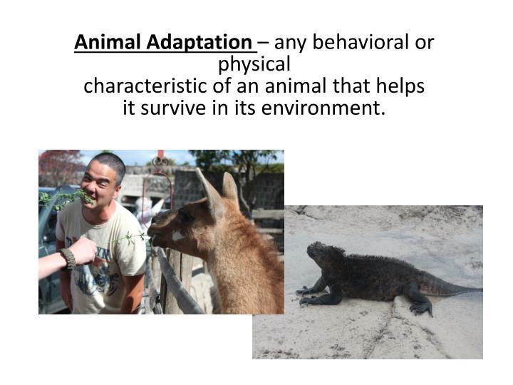 Animal Adaptation