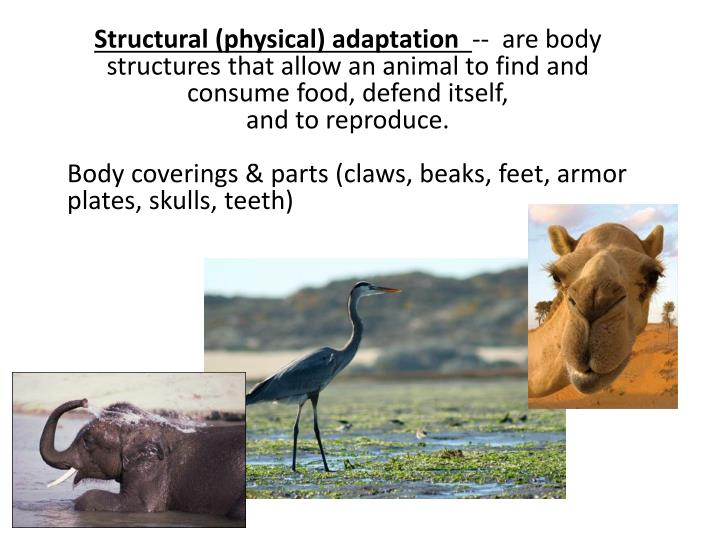 Structural (physical)