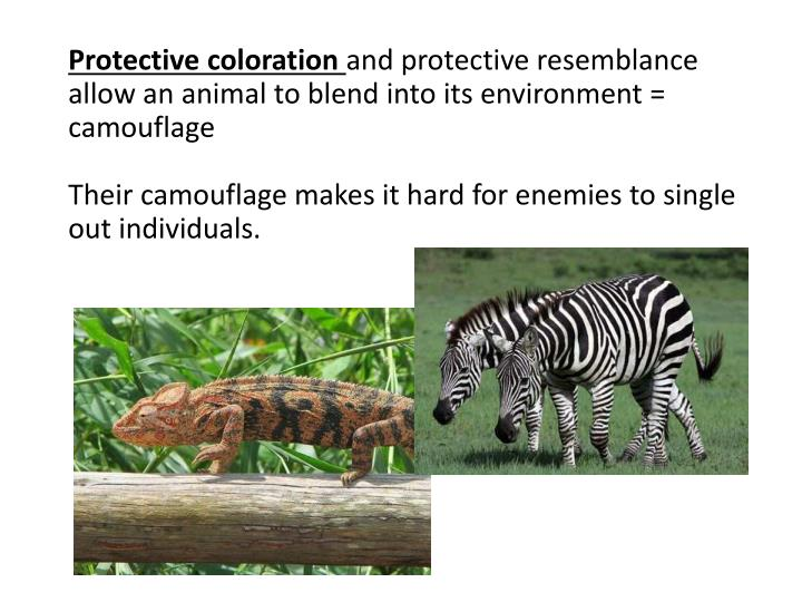 Protective coloration