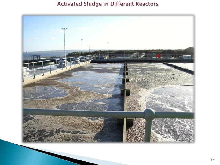 Activated Sludge in Different Reactors
