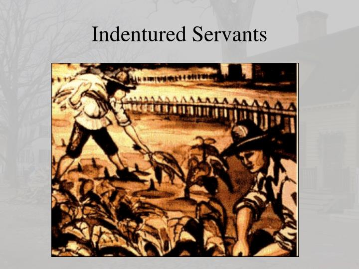 Indentured Servants