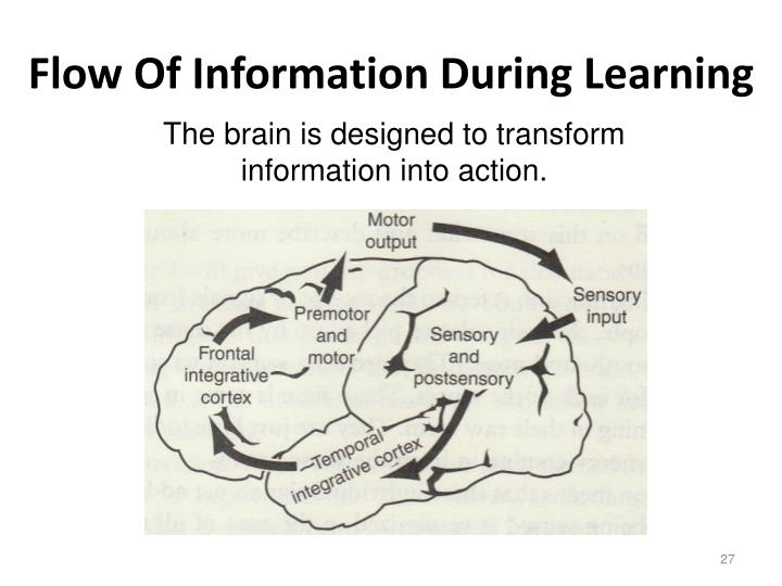 Flow Of Information During Learning