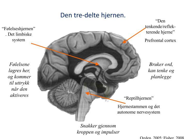 Den tre-delte hjernen.