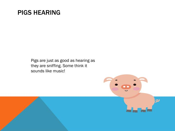 Pigs Hearing