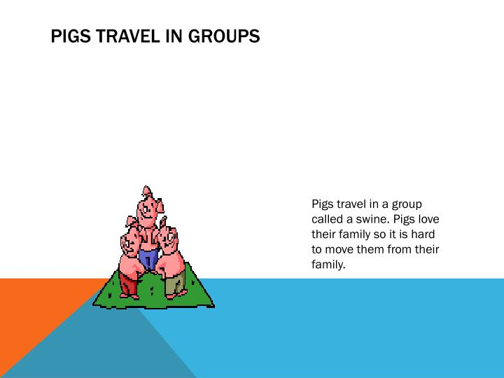 Pigs Travel in Groups