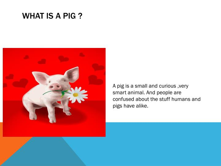 What is a Pig ?