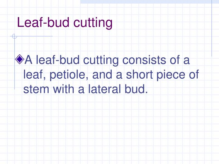 Leaf-bud cutting