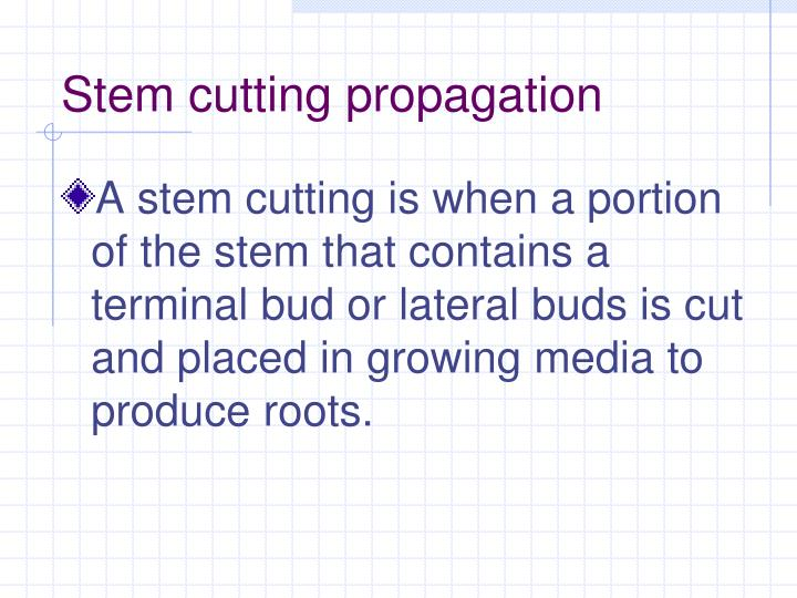 Stem cutting propagation