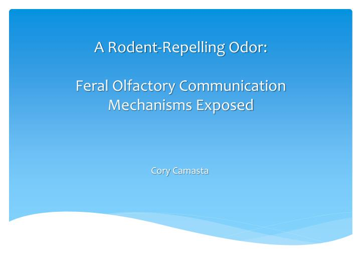 A rodent repelling odor feral olfactory communication mechanisms exposed