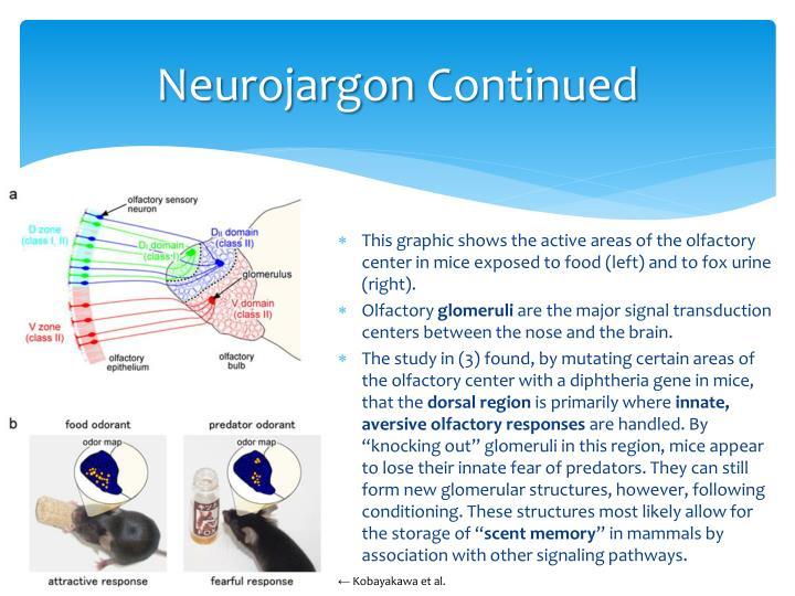 Neurojargon