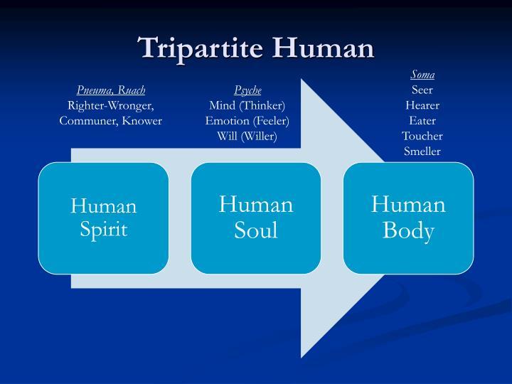 Tripartite Human