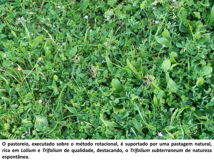 O pastoreio, executado sobre o método rotacional, é suportado por uma pastagem natural, rica em