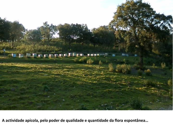 A actividade apícola, pelo poder de qualidade e quantidade da flora