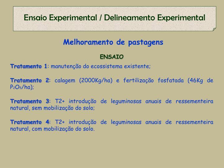 Ensaio Experimental / Delineamento Experimental