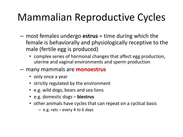 Mammalian Reproductive Cycles