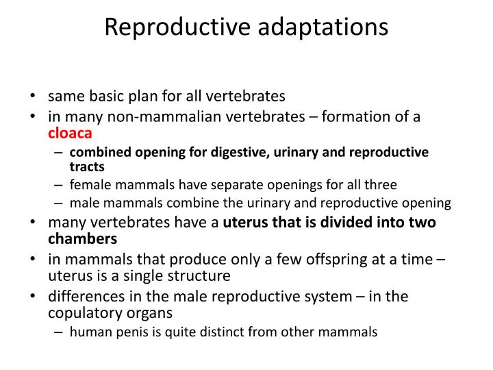 Reproductive adaptations